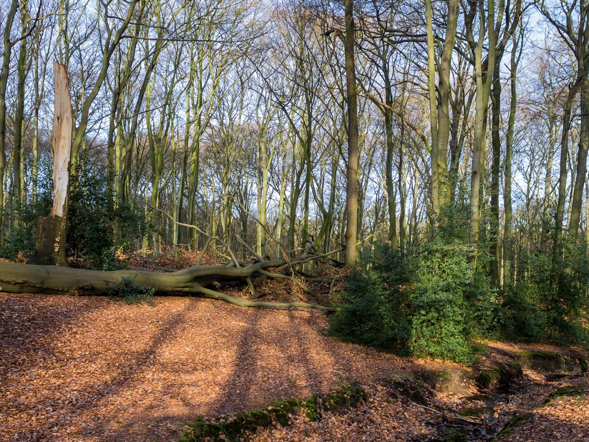 Hiesfelder Naturwaldzelle