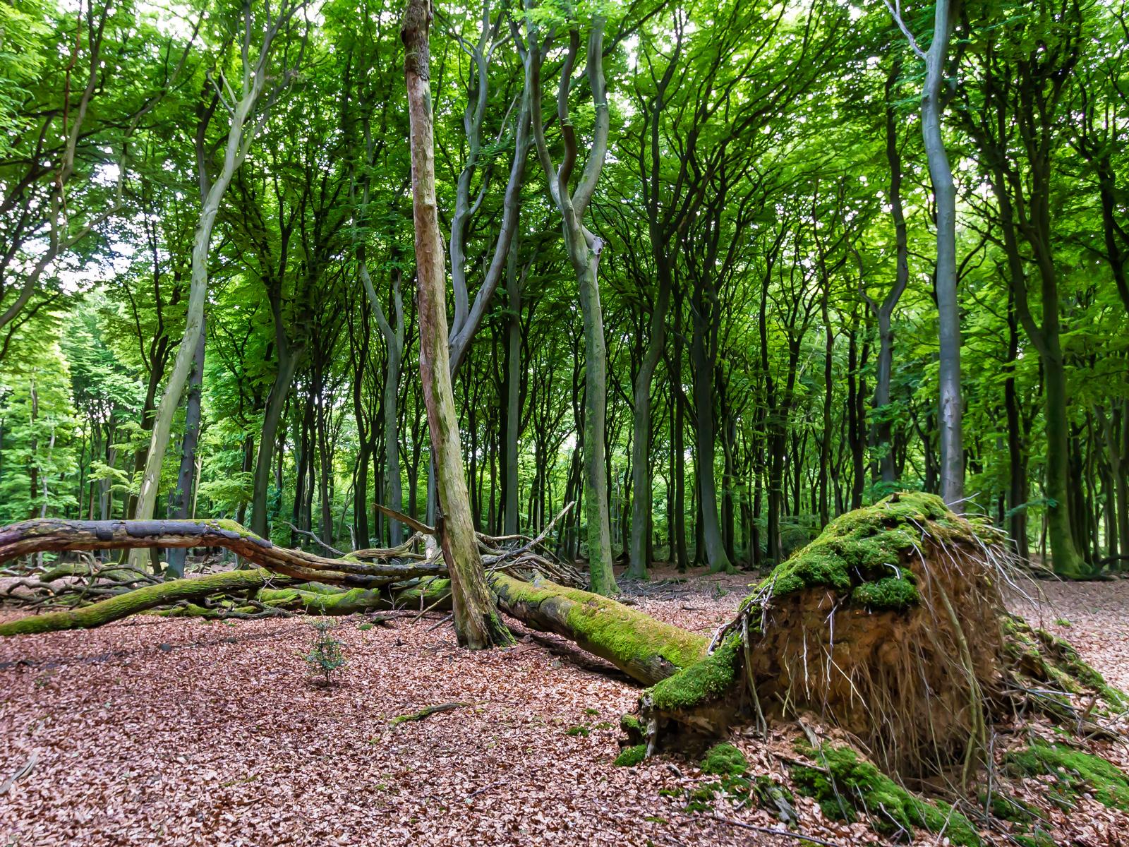 Liegendes und stehendes Totholz
