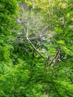 Erst kürzlich abgestorbener Baum