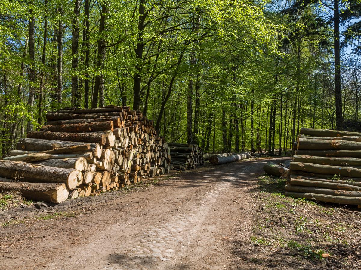 Holzpolter am Weg zu den Heiligen Hallen