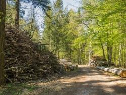 Waldrestholz
