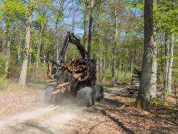 Rückezug beim Holzabtransport