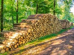 Holzpolter in der Nähe des Ruheforsts