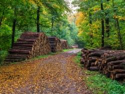 Holzpolter am Wanderweg nach Bad Eilsen