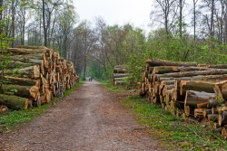 Missbrauch des Stadtwalds als Holzacker