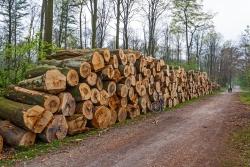 Zerstörung des Erholungswert des Stadtwalds zugunsten der Brennholz