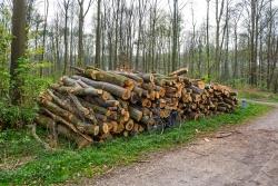 Brennholzpolter im Naherholungswald