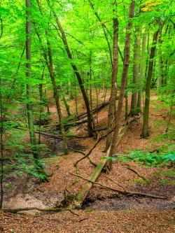Totholzreichtum am Bachtal