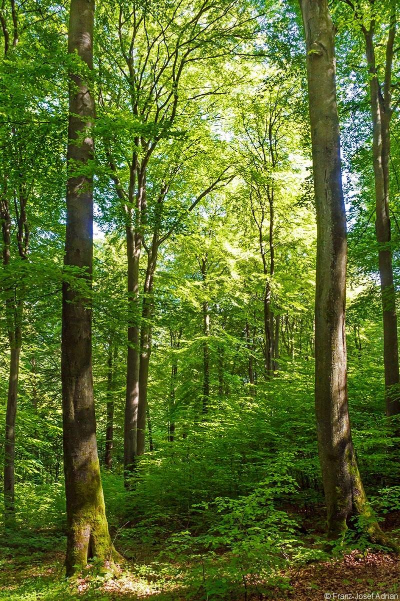 anteil am gemeindewald