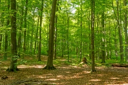 liegender Totholzbaum im Ruheforst