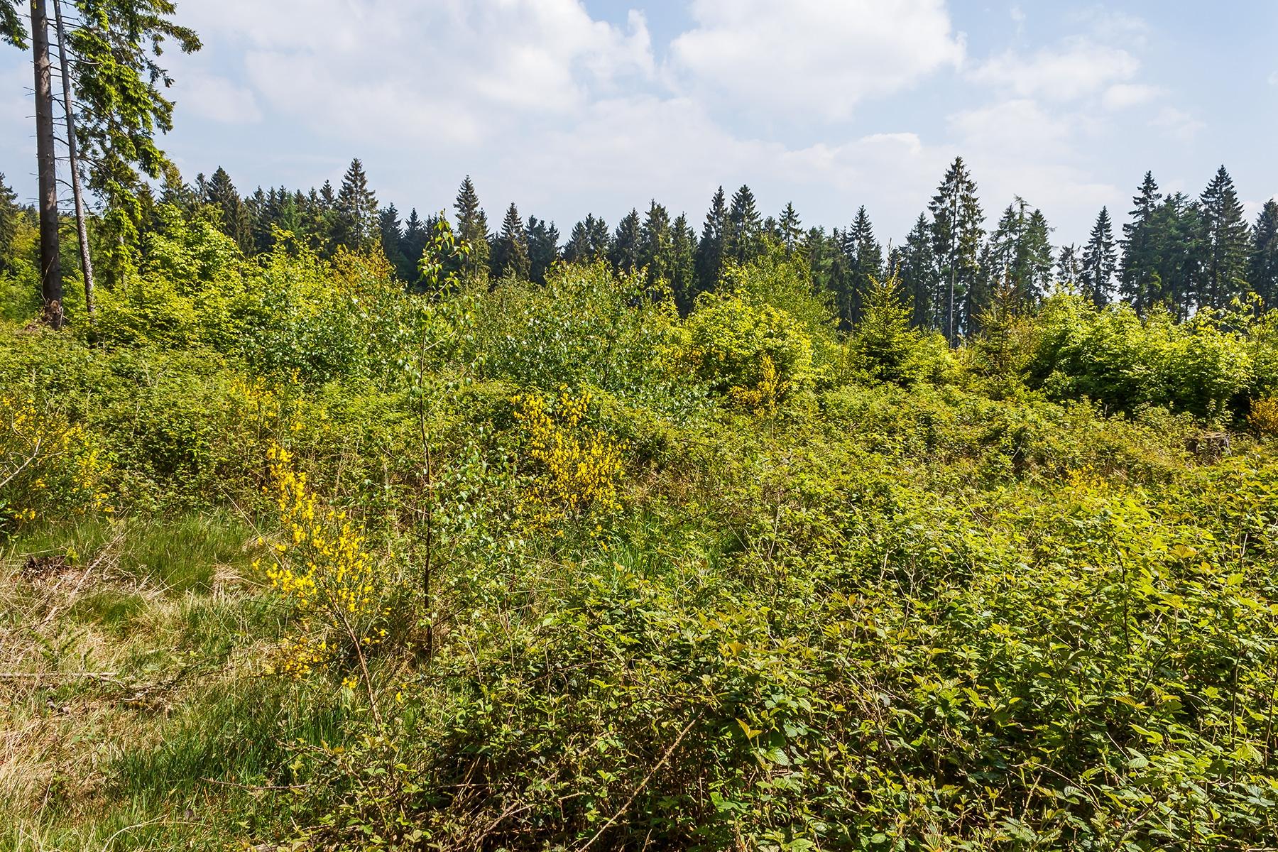 Kyrill Windwurf im Forstrevier Hümmel