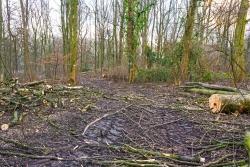 """Überreste der """"Waldpflege"""""""