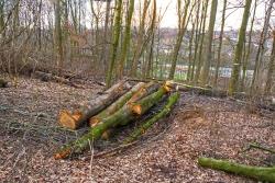 Brennholzproduktion im Stadtwald
