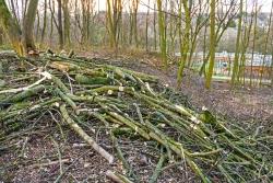 Kronenabfall als mickriger Ersatz für fehlendes Totholz