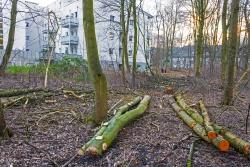 Zerstörung des Waldes in Sichtweite der Anwohner