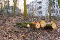 industrielle Holzernte direkt vor der Haustür