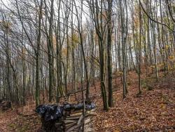 Buchenstangenholz und schwachses Baumholz