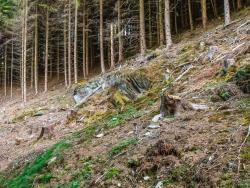 """Ebnung des Wegs in die Wildnis"""