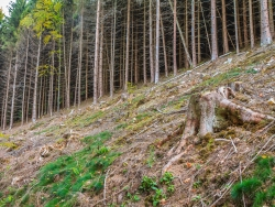 """Schaffung naturnaher Waldlebensräume"""