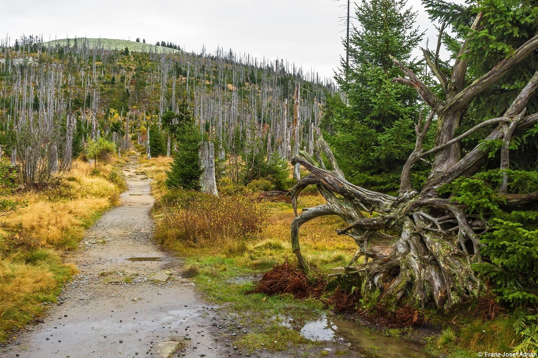Lusen (Nationalpark Bayerischer Wald)