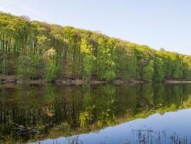 Grumsin (Biosphärenreservats Schorfheide-Chorin, UNESCO-Weltnaturerbe)