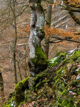 Hagenstein (Nationalpark Kellerwald-Edersee)