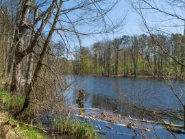 Schweingartensee in Serrahn (Müritz-Nationalpark, UNESCO-Weltnaturerbe)
