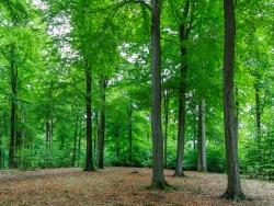 kahlgefressener Waldboden