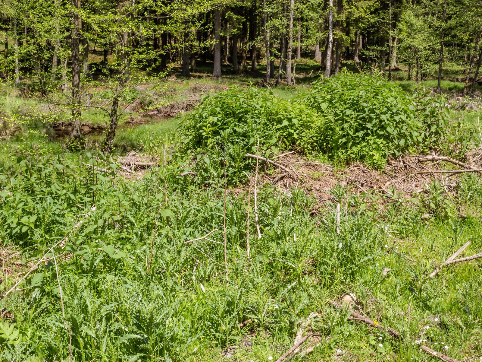 Disteln und Brennnesseln auf Hügel mit Astabfall