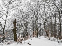 links: Biotopbaum an den Nammer Klippen