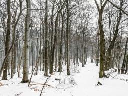 Kammweg entlang der Nammer Klippen (rechts)