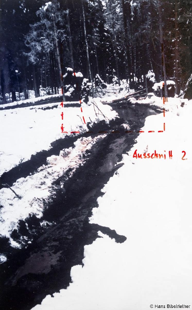 Rückeschäden im Klosterfilz 4.12.1998
