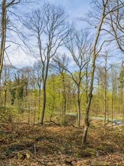 stark aufgelichteter Wald mit nur noch wenigen Altbäumen
