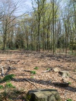 Kahle Flächen mit Baumkronenabfall