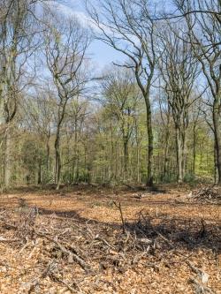 Lichtung ohne junge Bäume