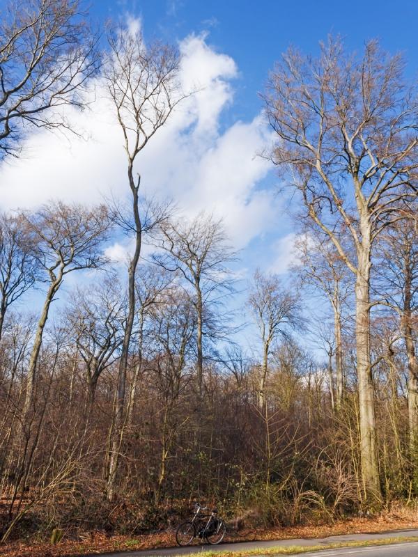 große Lücken zwischen den Baumkronen der wenigen Überhälter