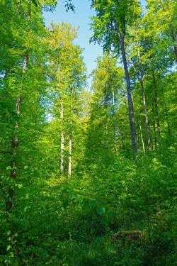 naturnaher Dauerwald