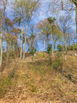 mehrere Stubben auf altbaumarmem Hang