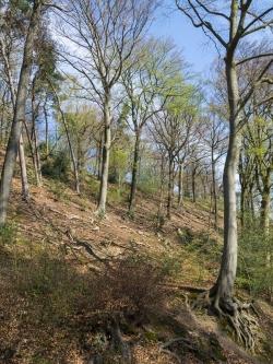 Kahler ausgedörrter Boden mit vereinzelten Altbäumen