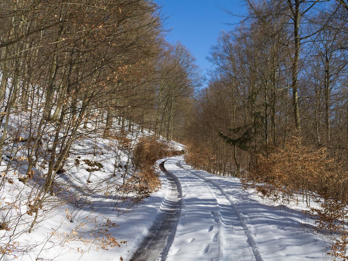 Wanderweg zum Tannendriesch