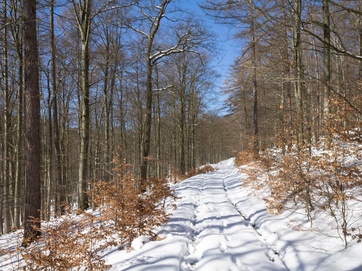 Buchenwälder an der Locheiche