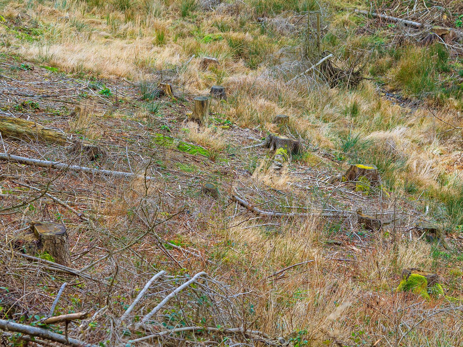 trockener, nährstoffarmer Boden - Lorbach rechts oben im Bild