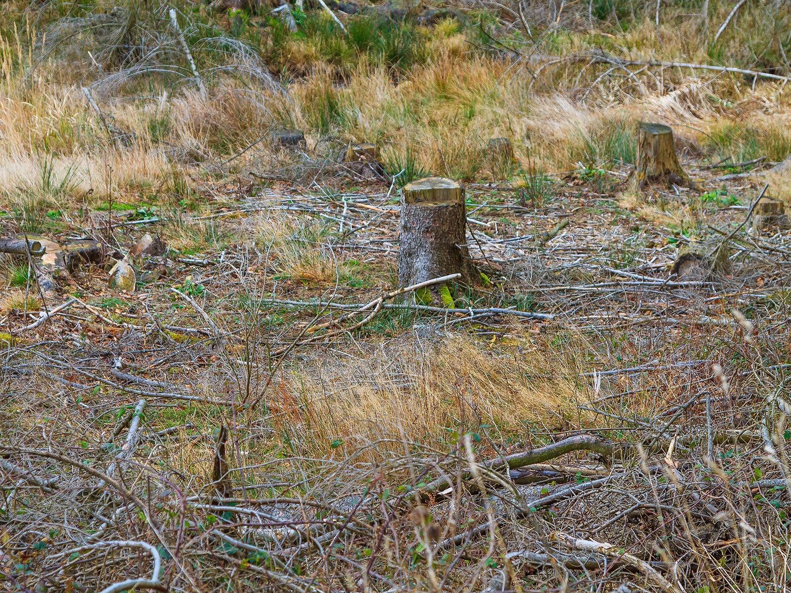 Baumstumpf auf verarmten und trockenem Boden