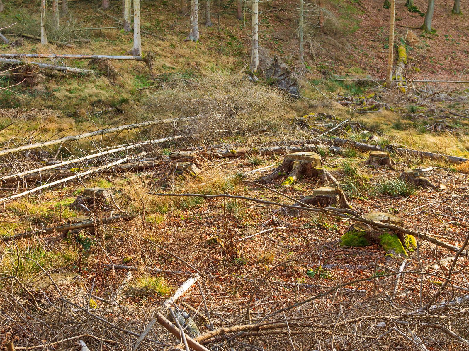 trockener Boden in der schmalen Talsohle