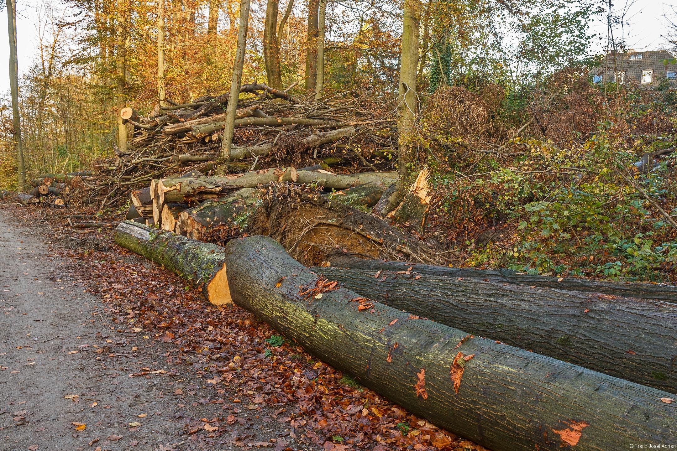 Das Holz darf nicht im Wald vermodern, sondern wird verbrannt.