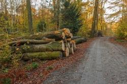 Frisch geschlagene Baumstämme am Wegrand: Das Totholz bleibt nicht im Wald.