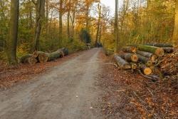 Schlechte Zeiten für Totholzkäfer und Spechte: Ihr Lebensraum wird verbrannt.