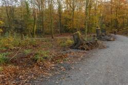 Überall am Wegrand frische Baumstümpfe: Das Holz wurde abtransportiert und zu Spottpreisen verramscht.