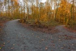 Die Forstwege sind so breit und so befestigt, dass die über 20 Tonnen schweren Holztransporter darauf fahren können.