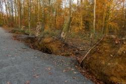 Nur die Baumstümpfe dürfen im Wald verrotten: Schlechte Zeiten für Pilze.